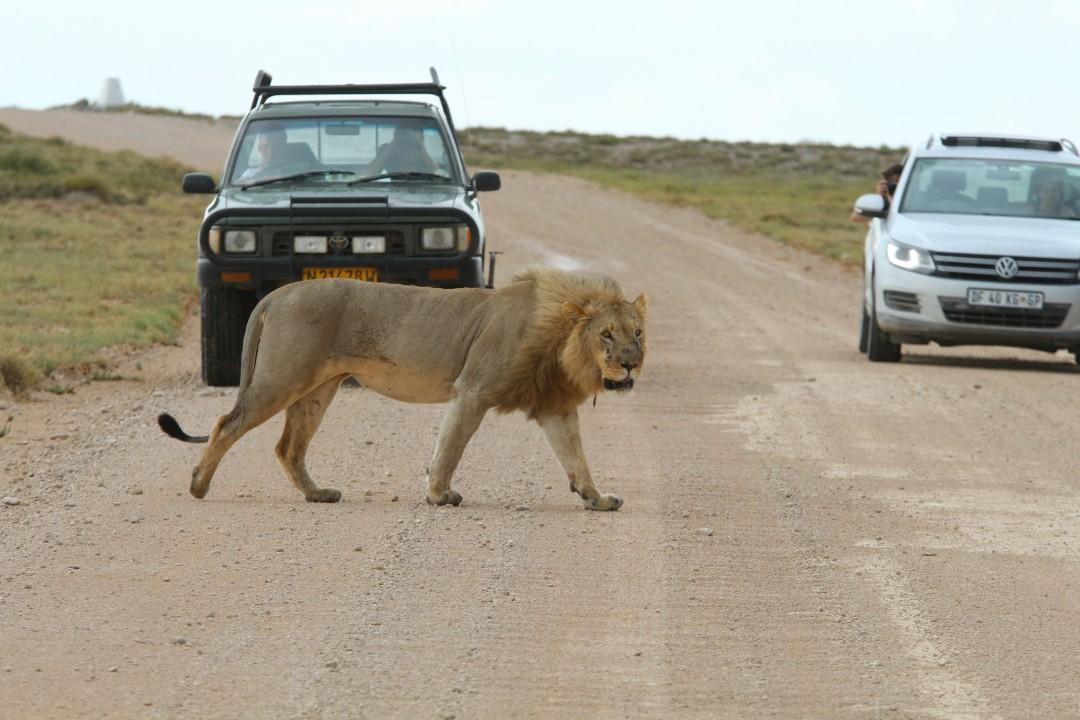 Etosha Nationalpark in Namibia