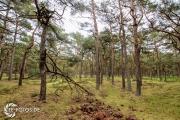 größte deutsche Ostseeinsel im Frühjahr - Tipps für den Rügen Urlaub