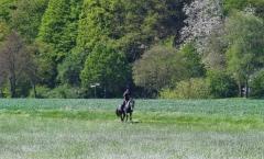 Reiten im Mai - Reitbild im Anflug auf ein Rapsfeld