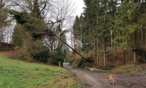 Orkantief / Sturmtief Frederike wütet auch im Solling / Weserbergland