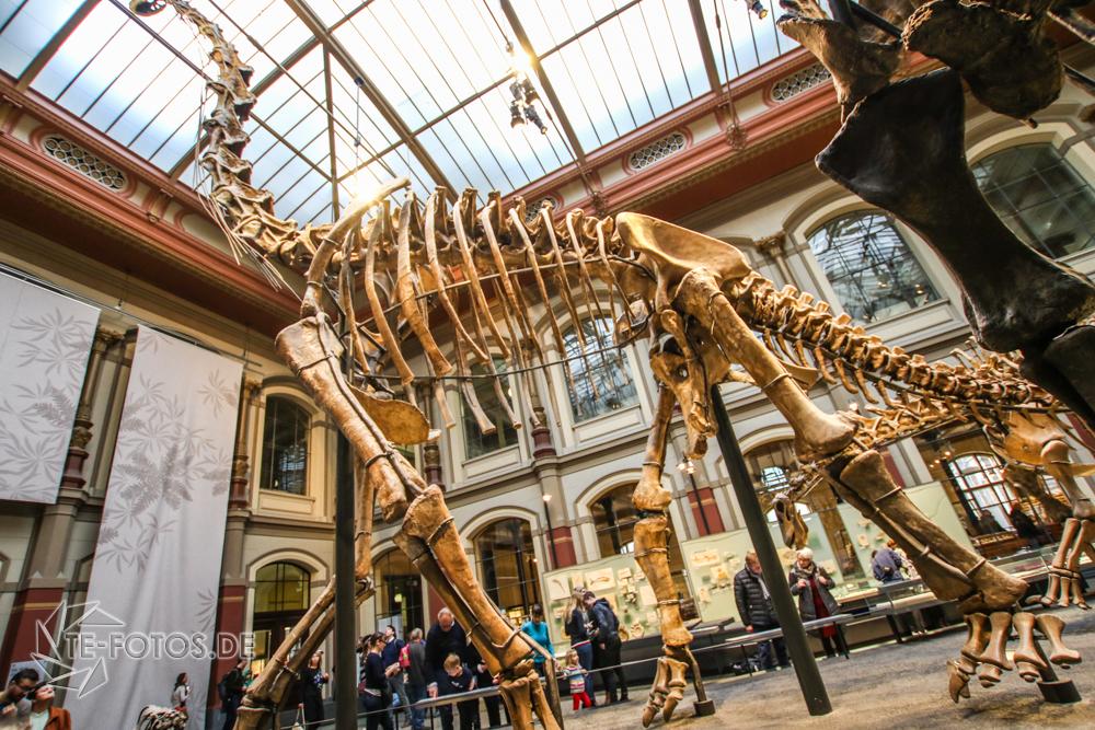 Naturkundemuseum Berlin - Museum zum Anfassen